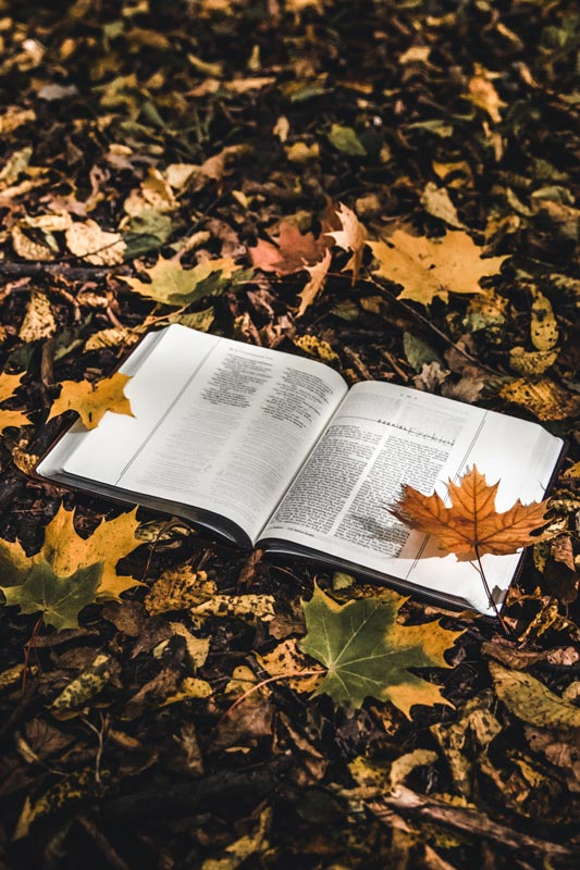 holy-bible-on-top-of-fallen-autumn-leaves