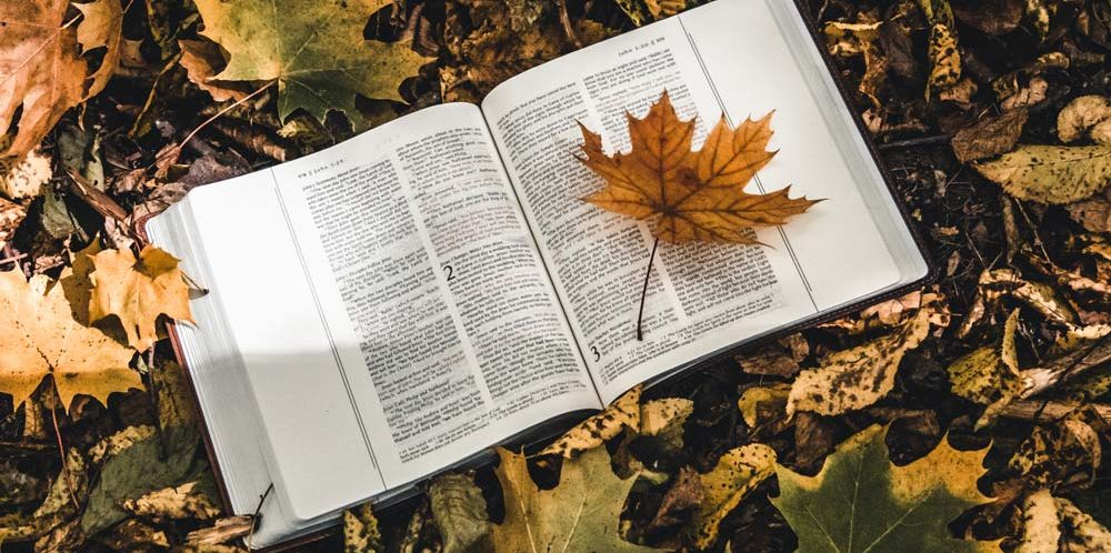 Freien Willen - holy-bible-on-top-of-fallen-autumn-leaves